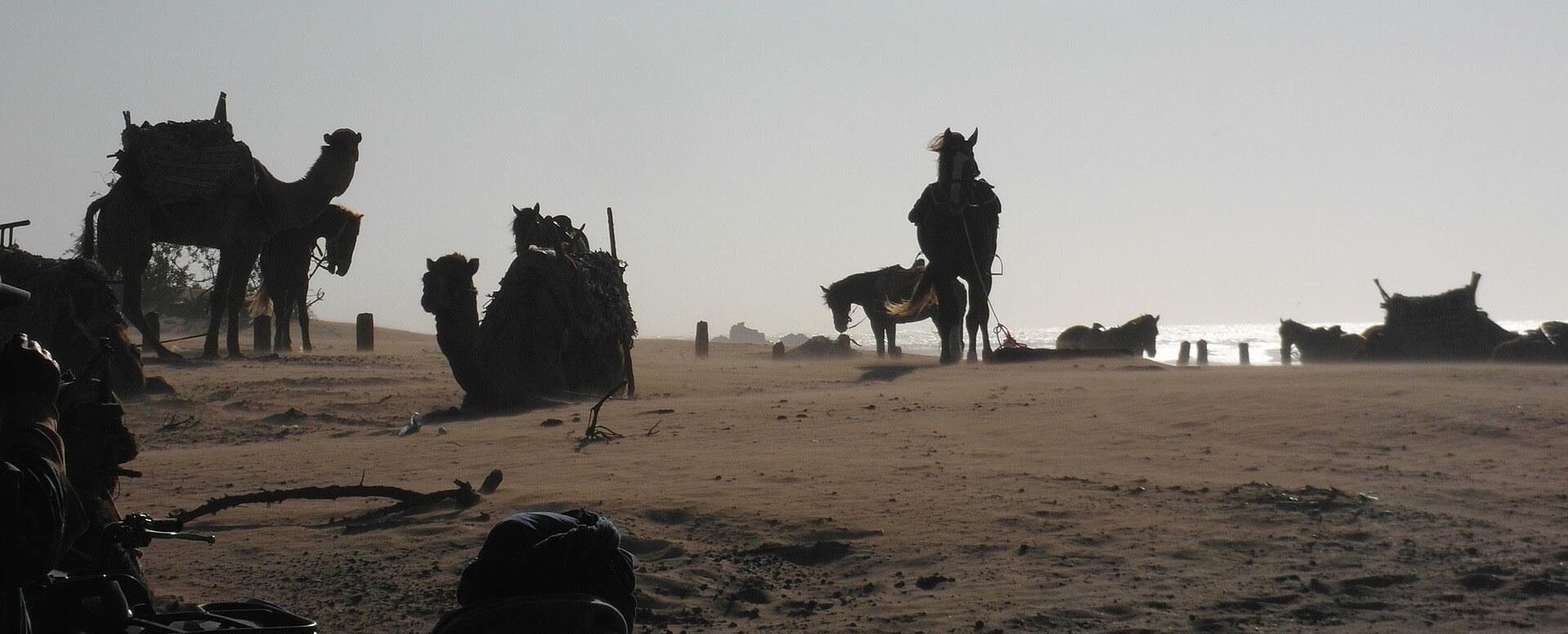 Un large choix d'activités en plein air - Essaouira