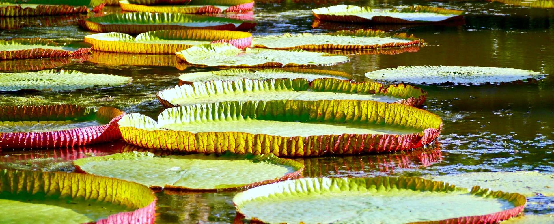 10. Unwind in the Botanical Garden in Pamplemousses - Mauritius