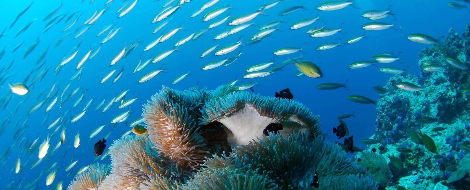 Scuba Diving - Algarve