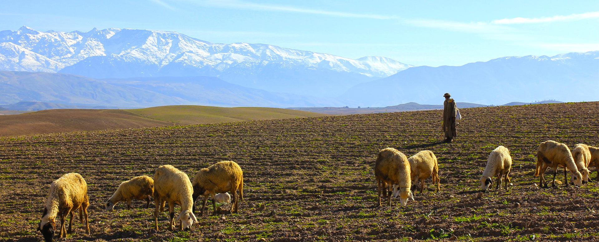 8. Faire une excursion dans les montagnes de l'Atlas - Marrakech