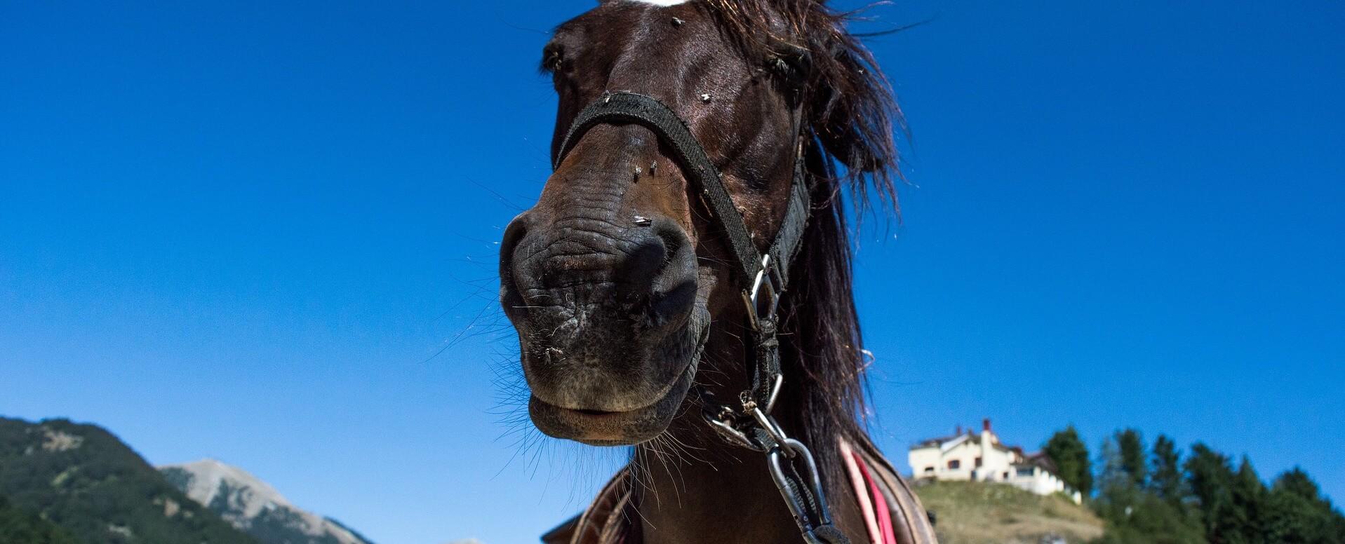 Balades à cheval - Corse