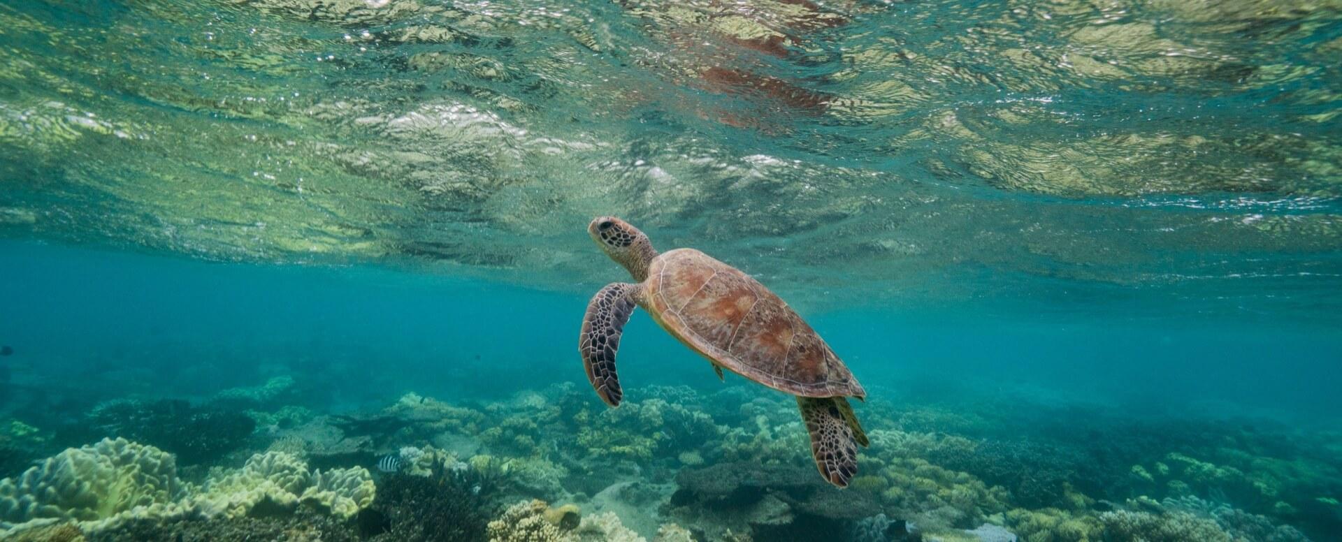 6- Essayez la plongée sous-marine - Bali