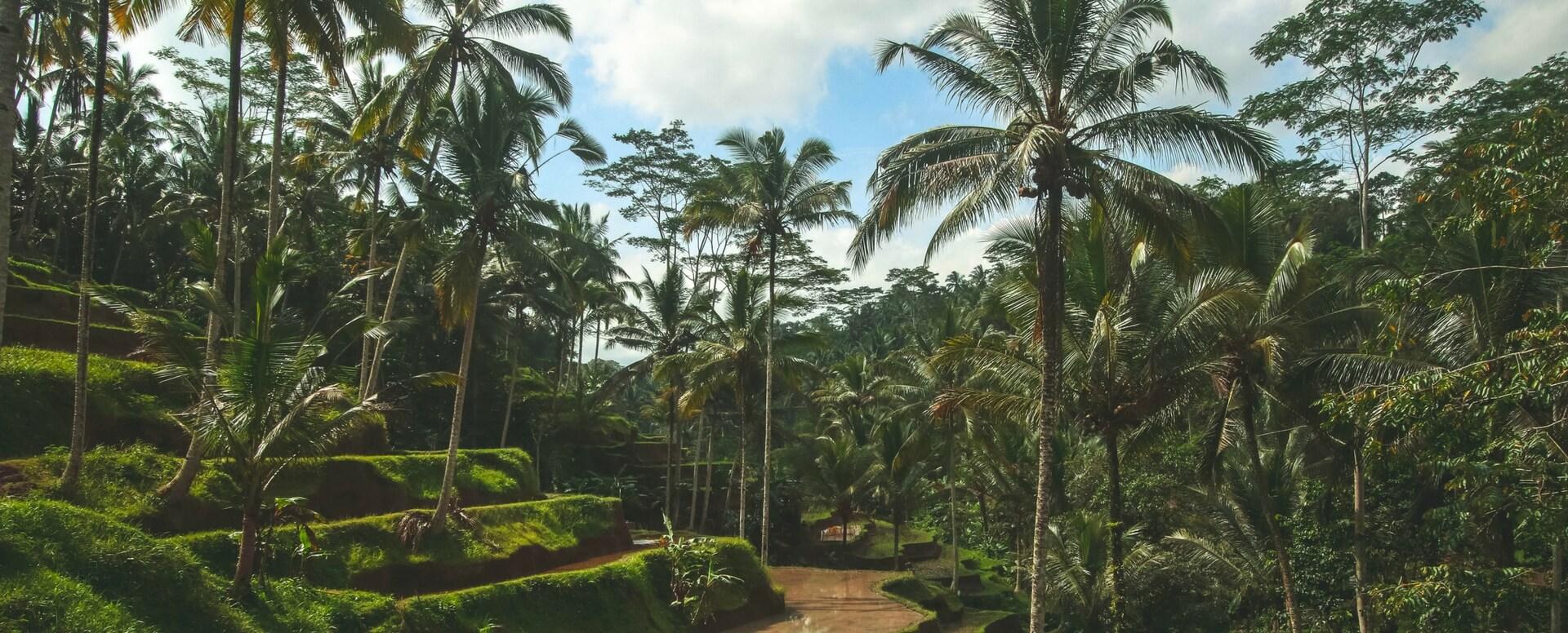 Que faire à Bali ? Idées d'activités - Bali