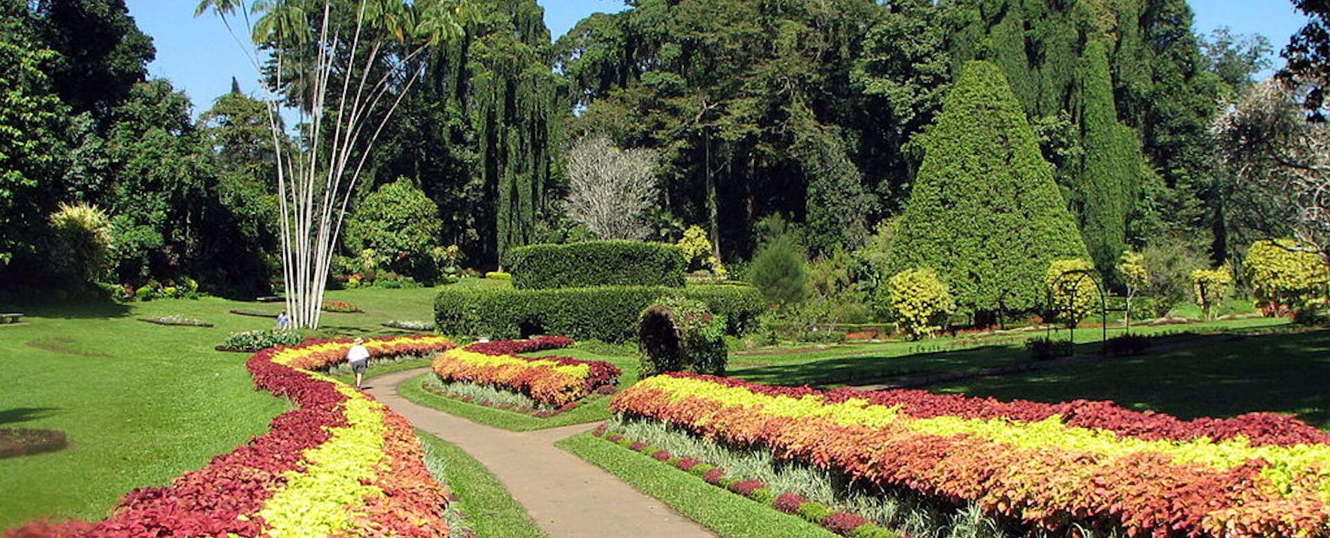Le jardin botanique de Kandy - Sri Lanka