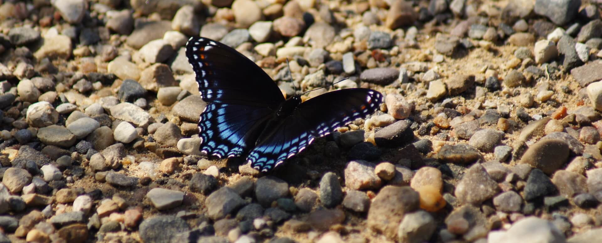 Butterfly Garden and Aquarium - Phuket
