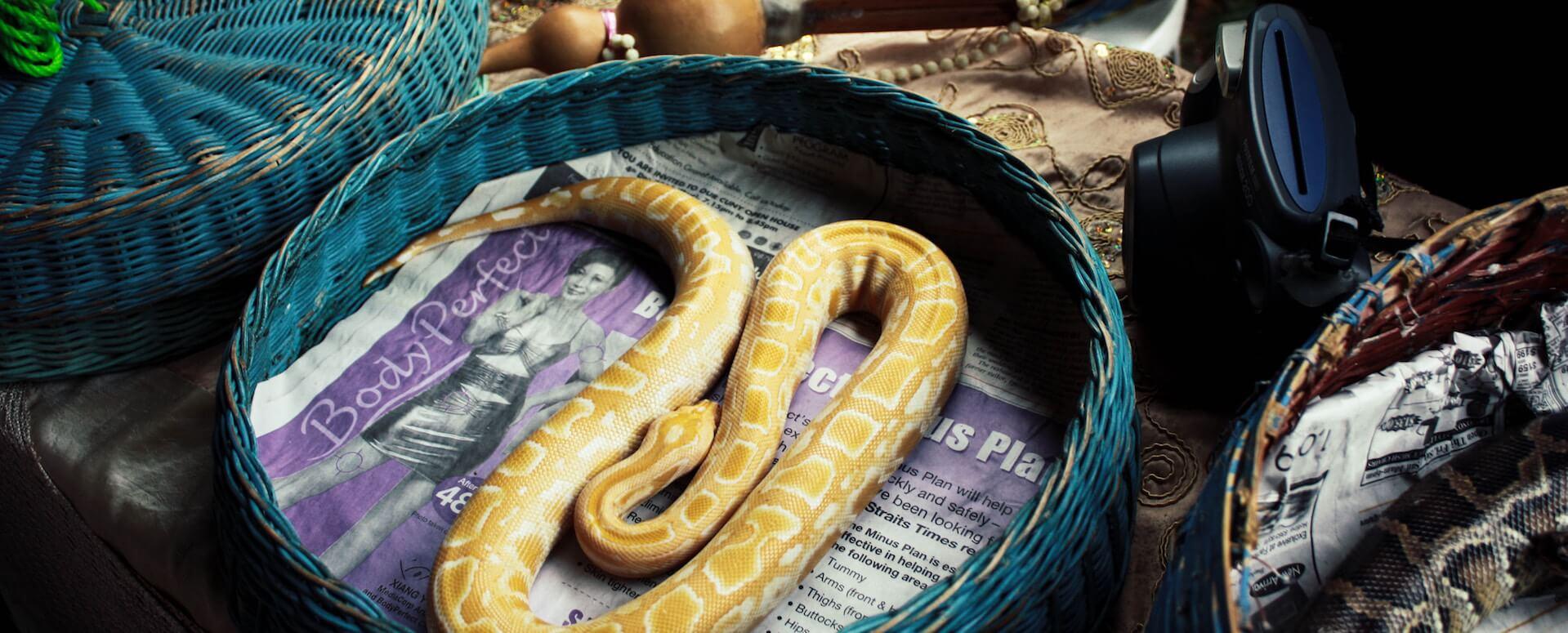 Spectacle de serpents - Phuket
