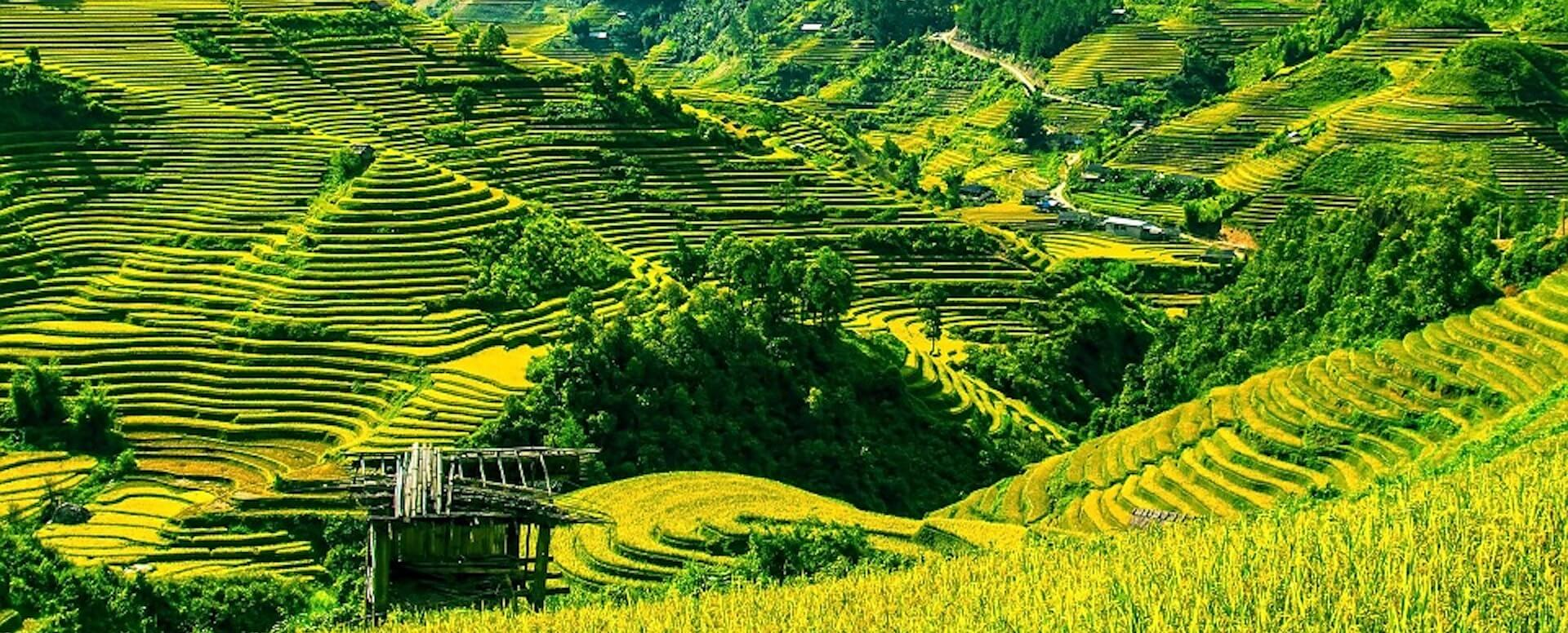 Landscapes of rice fields - Indonesia