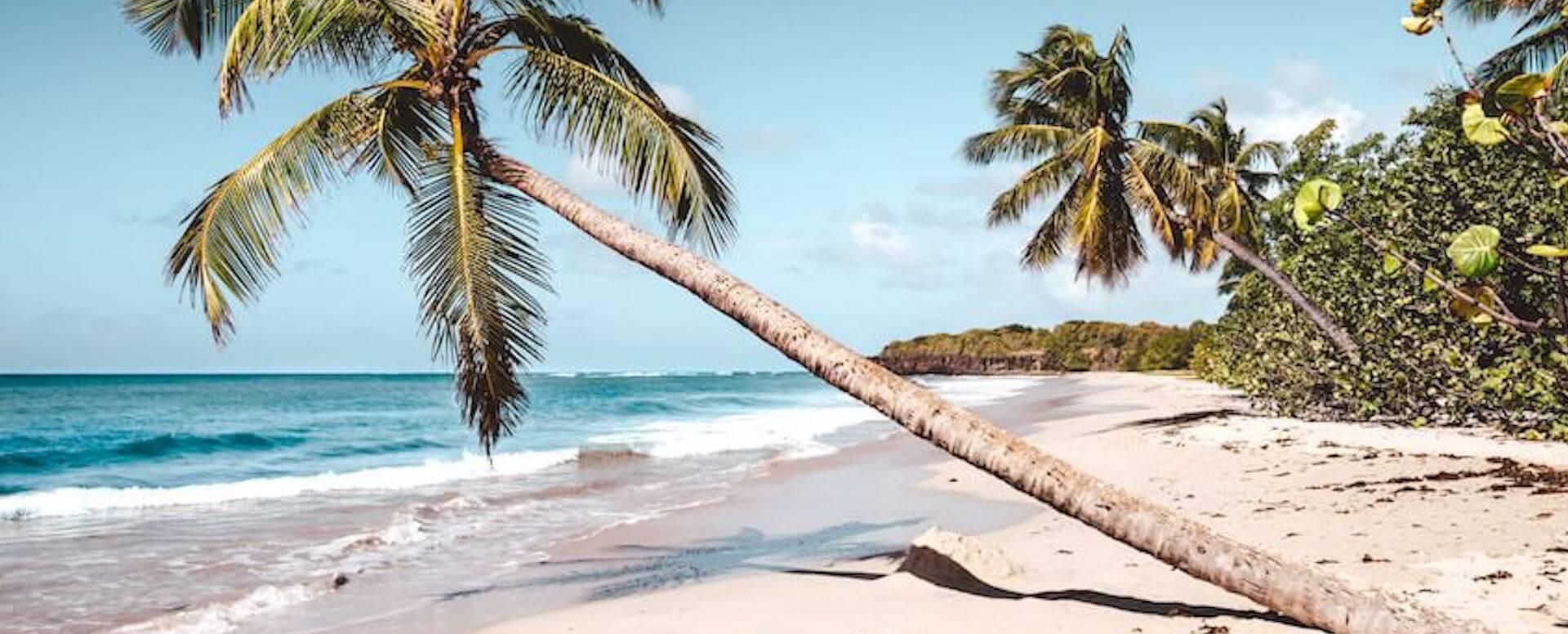 Anse des Salines - Martinique
