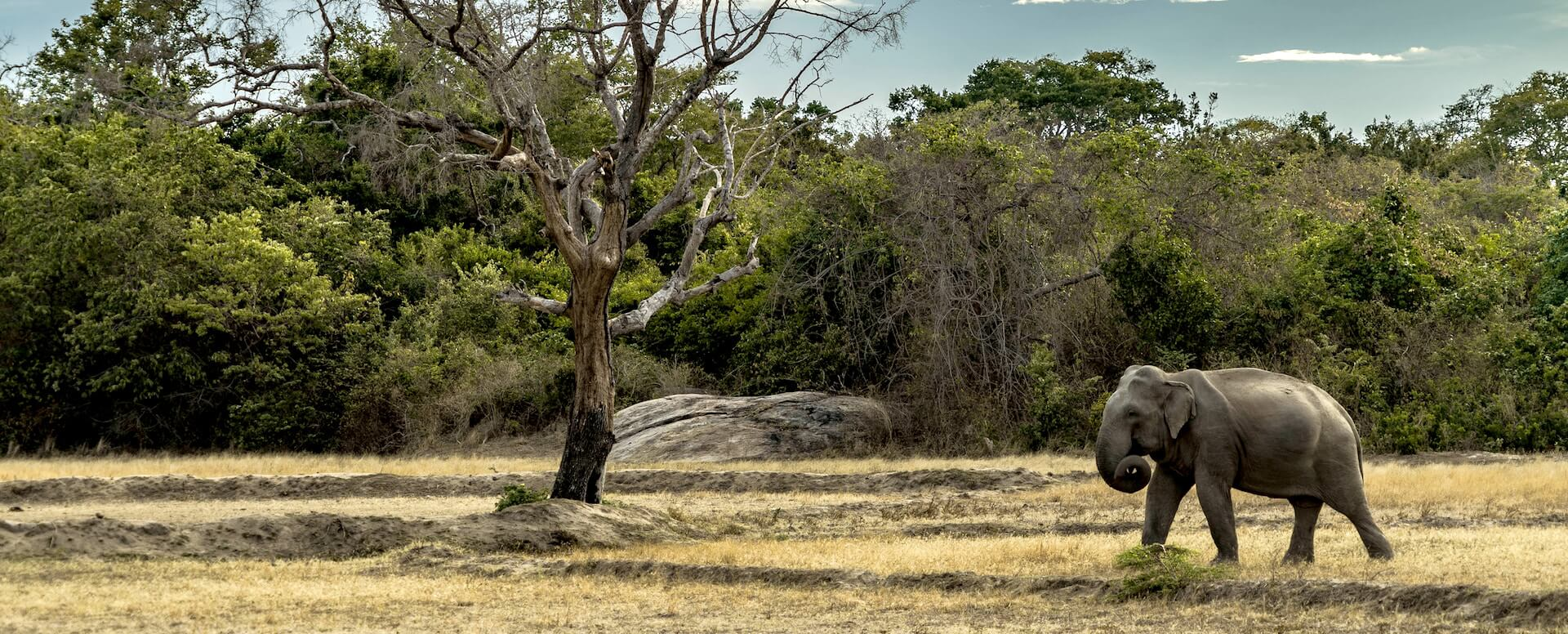 Parc national de Yala - Sri Lanka
