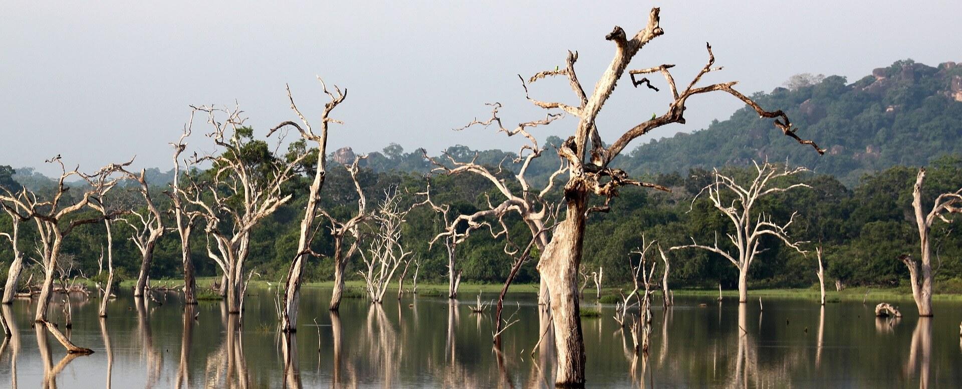 8. Taking advantage of national parks - Sri Lanka
