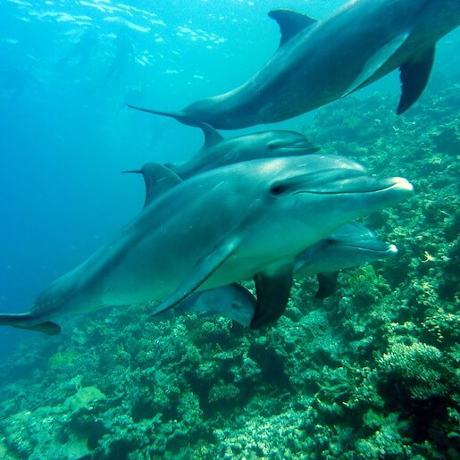 Enjoy the unique experience of swimming with dolphins
