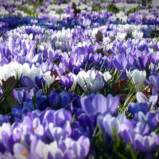 Saffron Paradise