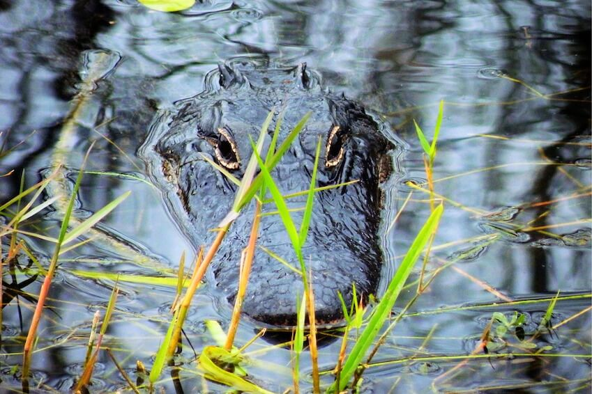 Live the magic of the Everglades