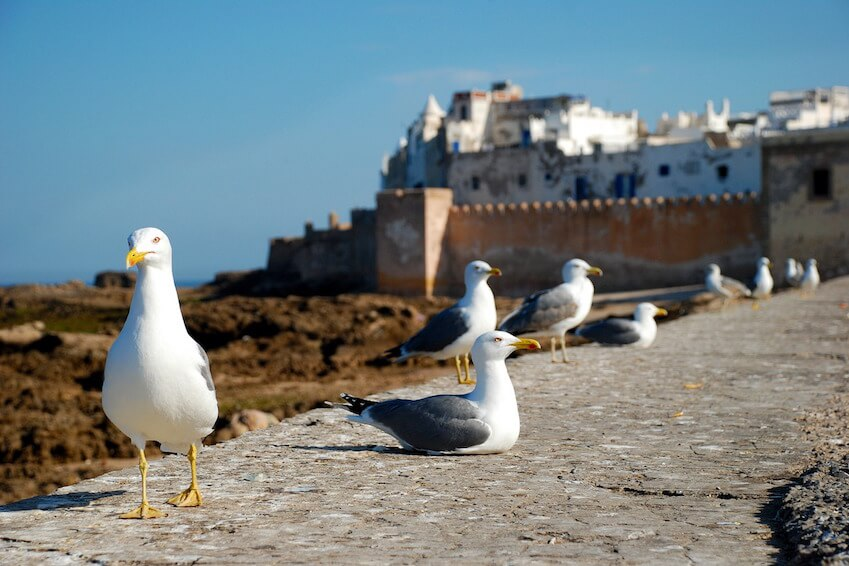 La cité par excellence des amoureux des spots venteux du Maroc