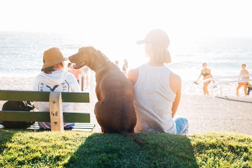 100% pet-friendly destinations