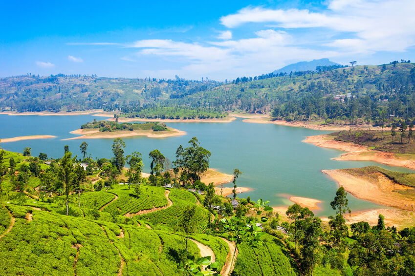 Between fauna and flora: In the heart of Sri Lanka's nature
