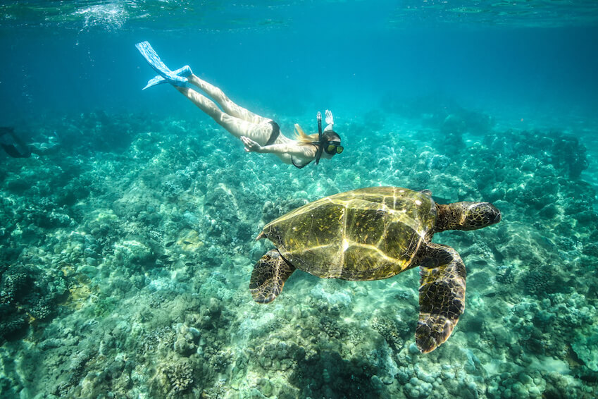 Where to swim with turtles?