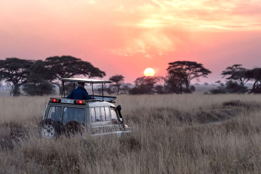 On the road of the greatest safaris