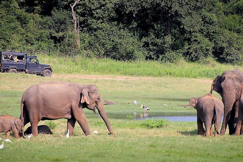 Parc National de Yala, Sri Lanka