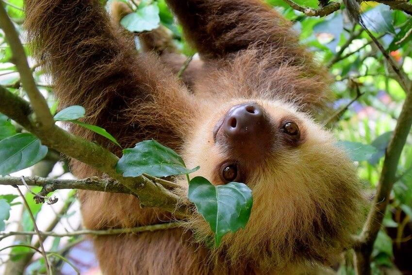 Jungle Safari Photo, Costa Rica