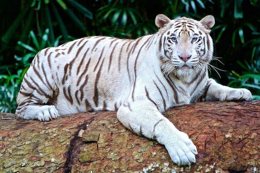 Parc Sundarbans, Inde