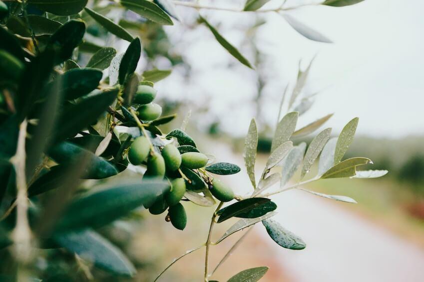 1- Aromas of mountain herbs and salty seas