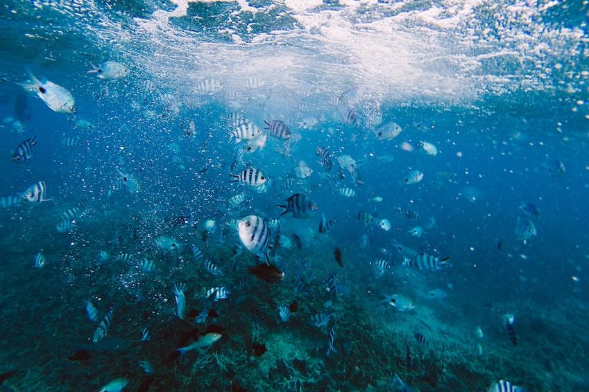 Plongez dans les eaux turquoises de l'Océan Indien à l'Île Maurice