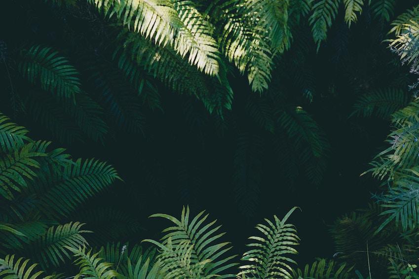 Explore a thriving green wilderness