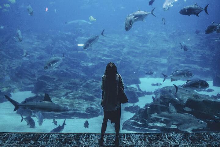 La découverte d'un aquarium géant