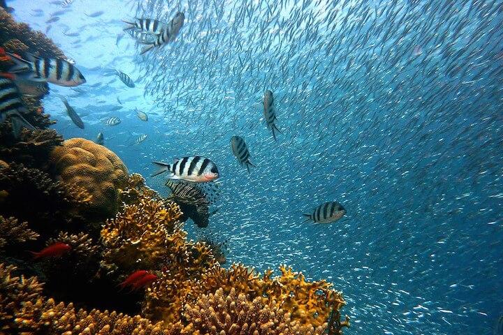 La visite d'un parc naturel marin