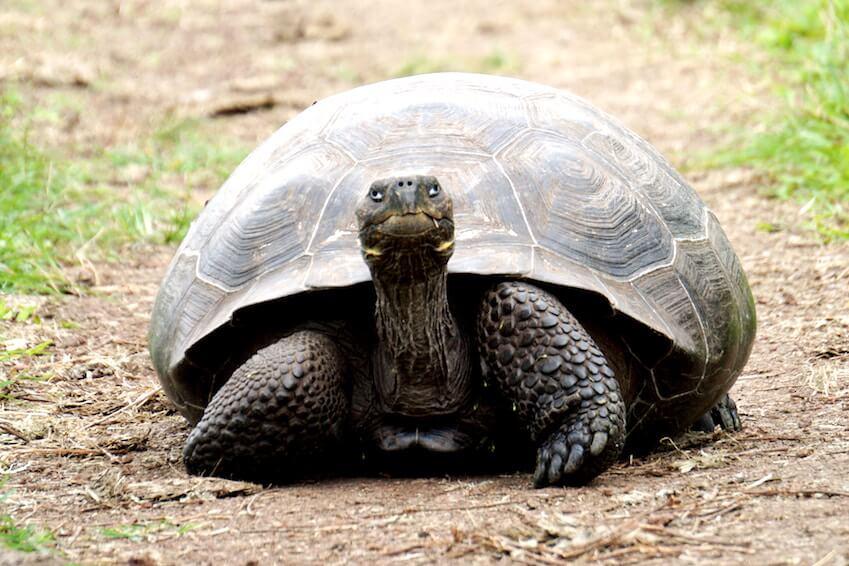 7- Observez les tortues géantes de Changuu