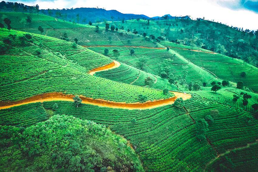 7- Le Sri Lanka
