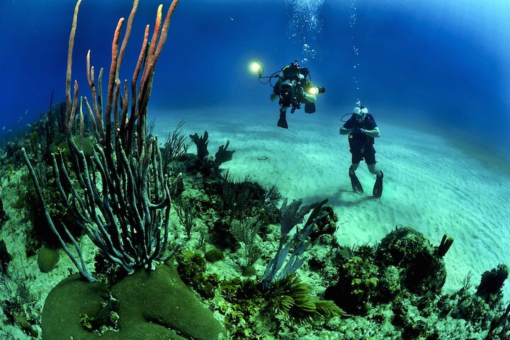 The Caribbean and the richness of its seabed