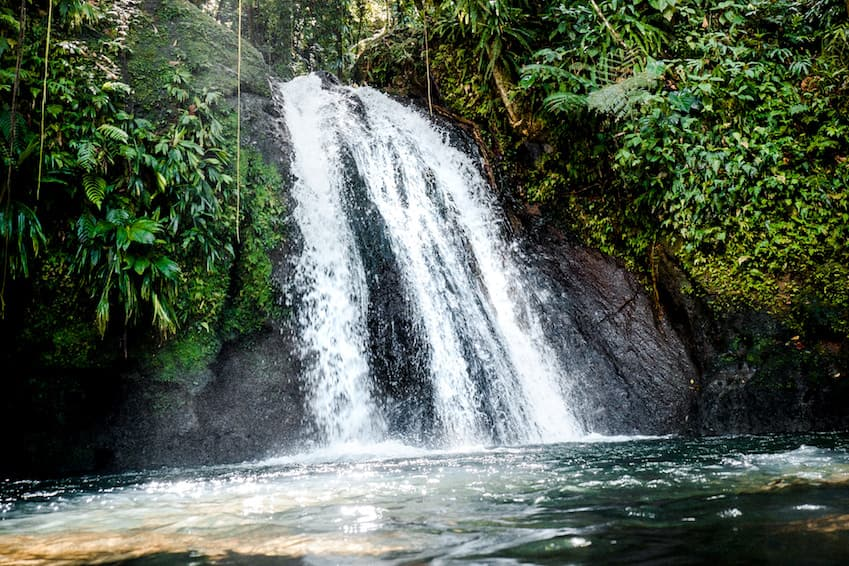 The prolific nature of Guadeloupe