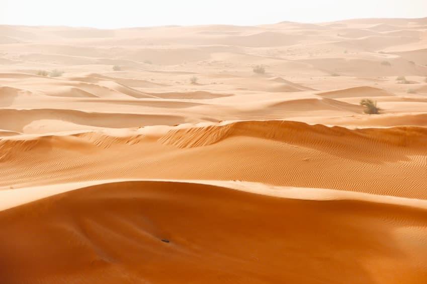 7- Organisez un safari dans le désert