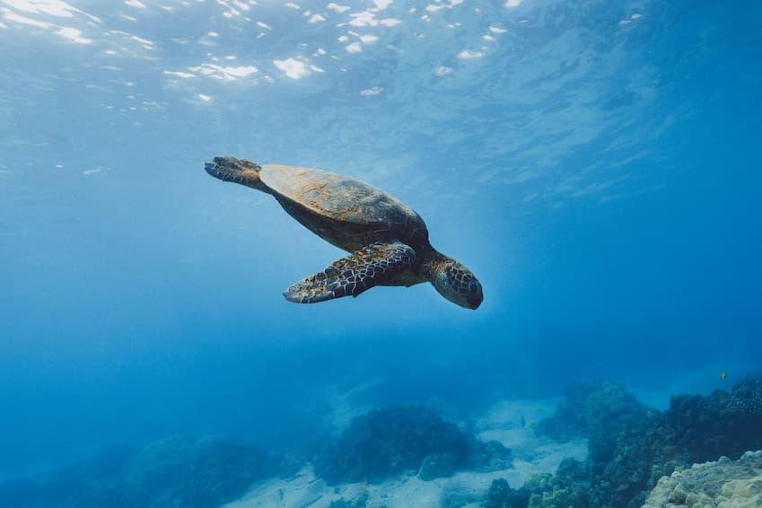5- Snorkel in Isla del Cano