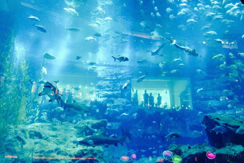 L'aquarium-zoo souterrain