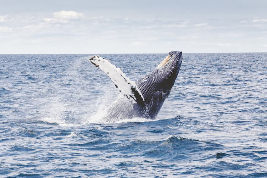 A nature getaway: the whales of Hermanus