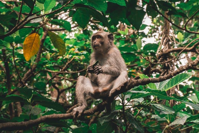 L'incontournable : la forêt des singes d'Ubud