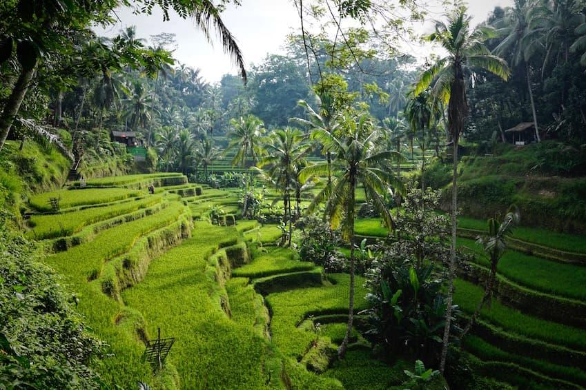 La légendaire forêt des singes de Sangeh