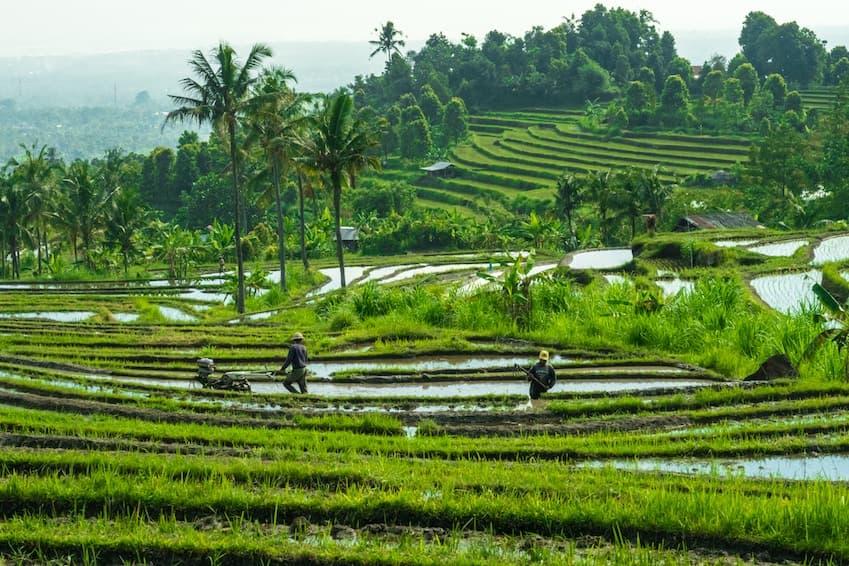 1 - Bali, « L'île des dieux»
