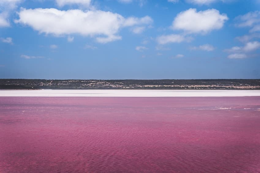 The pink lagoon