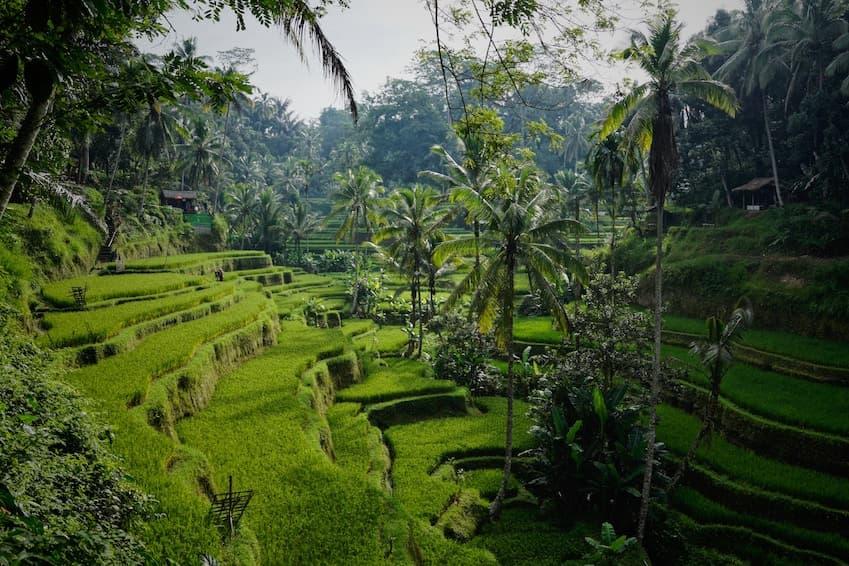 1 . Un paysage de rêve