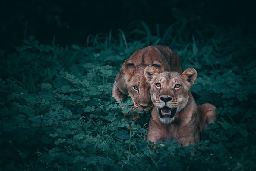 Un Safari en Afrique du Sud