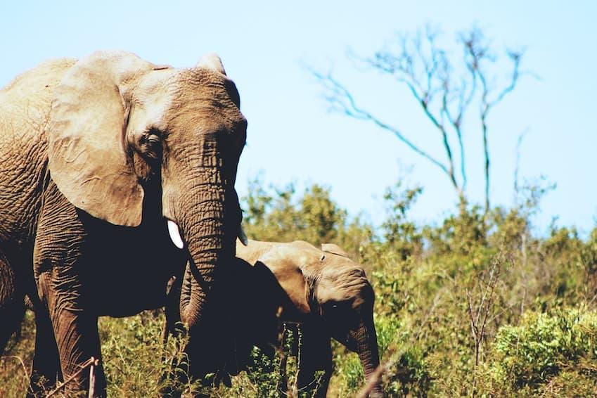 S'approcher des éléphants au Sri Lanka ?
