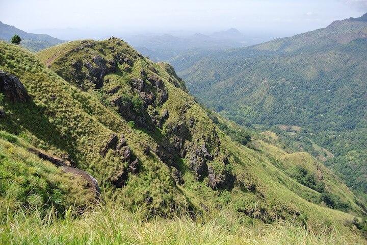 La faune et la flore sri lankaise