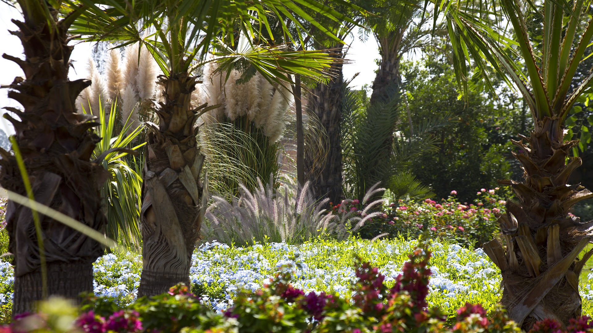 Photos de la villa villa amanassa marrakech villanovo for Jardin villa maroc